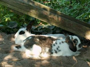 løbegård til kanin lav selv